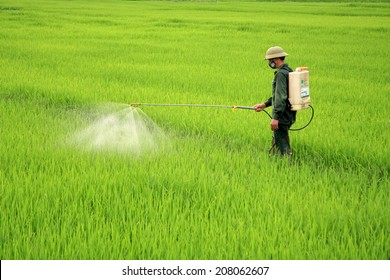 Dien Bien Phu, Vietnam July 30, 2014: A farmer is spraying insecticides, in rice fields.