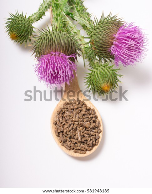 Dietary supplement - granular and fresh thistle with flowers (Silybum marianum, Scotch Thistle, Marian thistle ) isolated on white background.