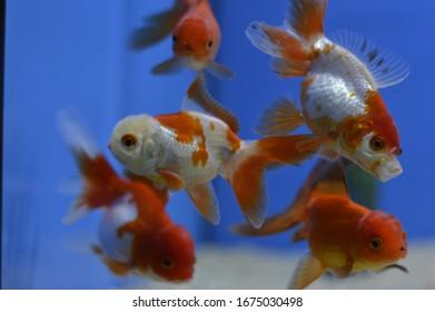 Divers types de poissons tropicaux et d'eau froide