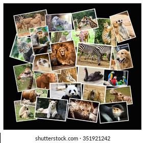 Different animal collage in the zoo