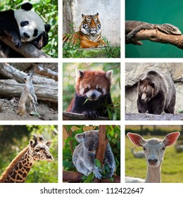 Different Animals Collage With Nine Photos