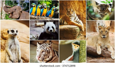 Different animals collage in the zoo