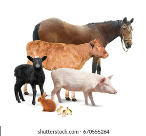 Different animals on white background