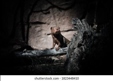 different animals of different species dark style