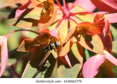 different arthropods and insects in gardens