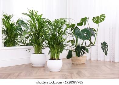 Different beautiful indoor plants on floor in room. House decoration