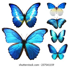 Different blue butterflies