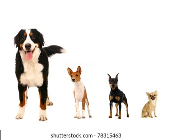 Different breeds of dog on a white background