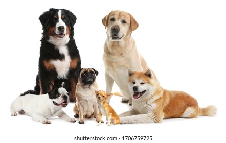 Different breeds of dogs on white background