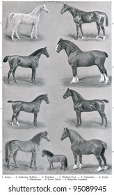 """Different breeds of horses. Publication of the book """"Meyers Konversations-Lexikon"""", Volume 7, Leipzig, Germany, 1910"""