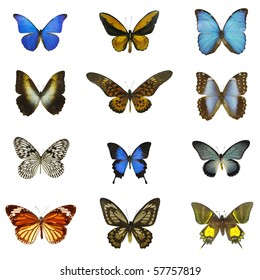 different butterflies with white background
