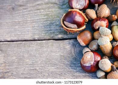 Different chestnuts and acorns on wooden background