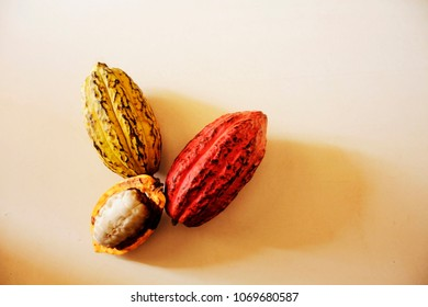 different cocoa fruit isolated on a table