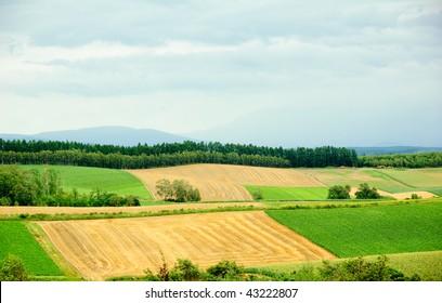 different color farmland in Hokkaido in Japan