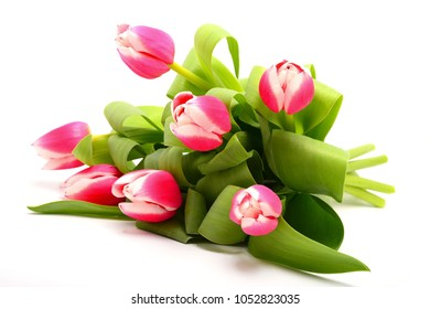 Different color tulips