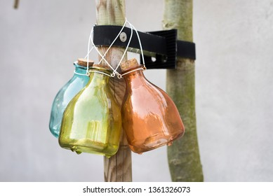 different color wasp traps