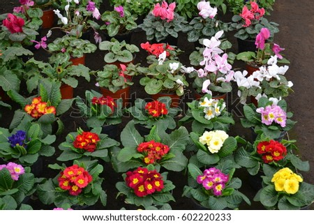 Different Colored Perennial Flowers Stock Photo Edit Now 602220233