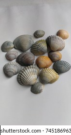 a lot different colored and sized seashells in the white background