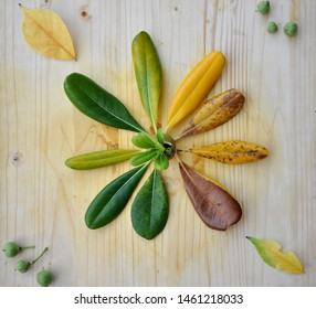 Different colors of the Mediterranean leaf on a wooden background.