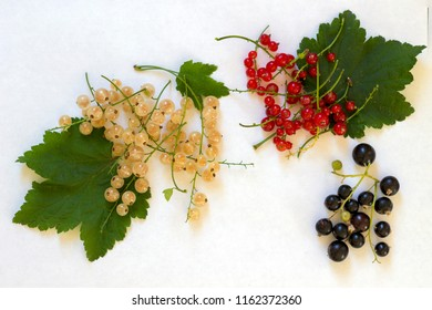 Different colorsof currant with leaves. Red, black and white currant on the white background.