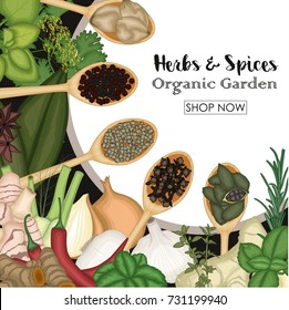 Different cooking herbs and spices in wooden spoons