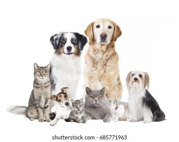 Different dogs and cats against white background, isolated