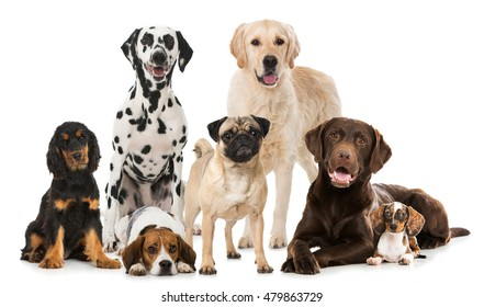 Different dogs isolated on white