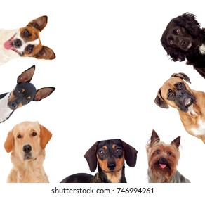 Different dogs looking at camera isolated on a white background