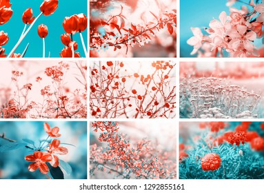 Different flowers blossom. Collage with flowers and plants. Beautiful nature pastel color floral background.