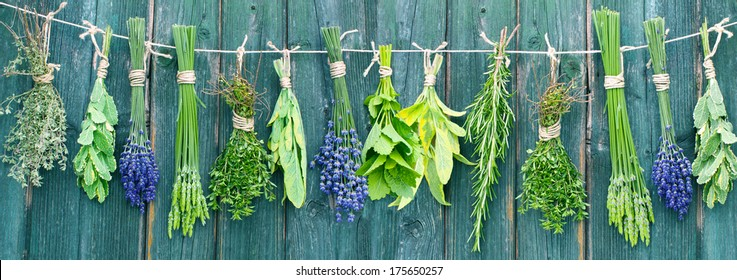 different fresh herb bundles hanging in front of a wooden wall