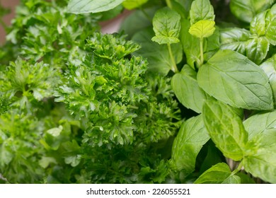 Different fresh herbs on wooden background, parsley and basil and rosemary