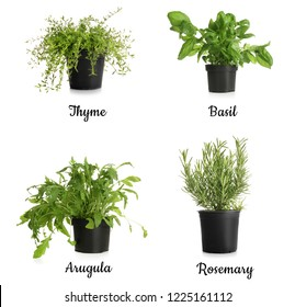 Different fresh herbs in pots on white background