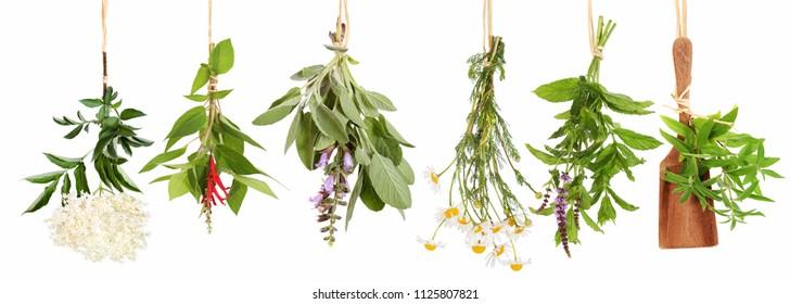 Different fresh tea plants,