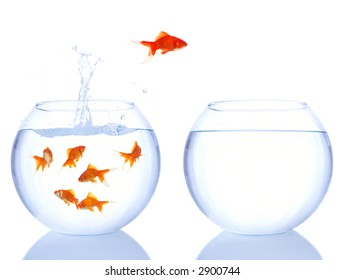 different goldfish jumping for a better house