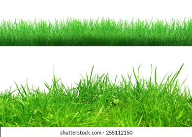 Different grass on the white background