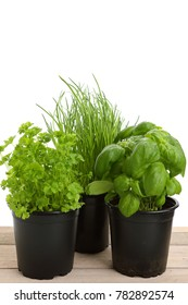 different green herbs for cooking with white background