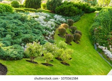 different green plants on the slope in landscape design