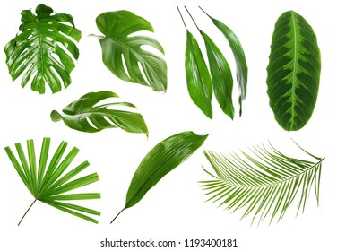 Different green tropical leaves on white background