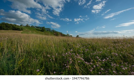 Different herbs in the meadow in the evening on the hillside, landscape with countryside. Summer season, June. Ukraine. Europe. Web banner.