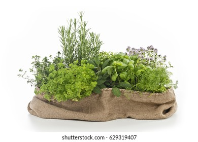 different herbs with white background