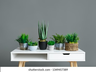 Different house plants in pots on white table at grey background. Greenery home decoration concept