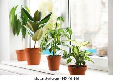 Different indoor plants on window sill at home