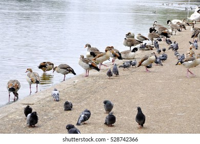 Different kind of birds gathering by a pond