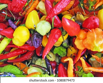 a lot of different kind of fresh peppers background
