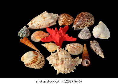 Different kind of sea shells and a red starfish or sea star isolated on black background.