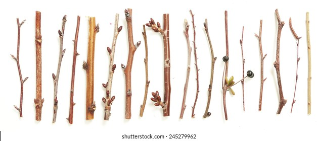 Different kind of twigs, A lot of branches of different plants and trees on white