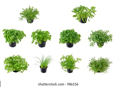 Different kinds of isolated herbs, from top left to right: Rosemary, Sage, Basil, Parsley, Lemon balm, Oregano, Coriander, Chive, Chervil and Thyme