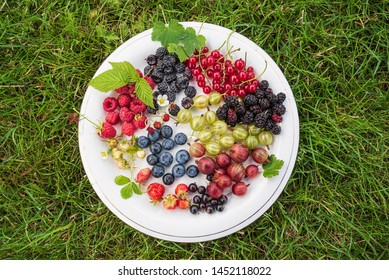 different kinds on berries on white plate