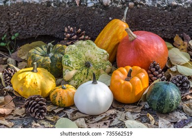 Different kinds of pumpkins arranged on the stairs in a park