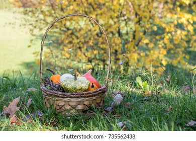 Different kinds of pumpkins in the basket in a park